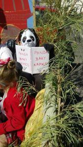"Close up of panda reading ""Panda Baby Names"" book"